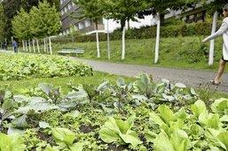 Les métiers de la terre à Lausanne