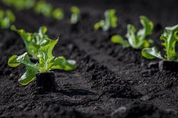 Soutien aux produits bio