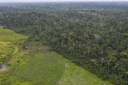 """43 millions d'hectares perdus sur les principaux """"fronts"""" (WWF)"""