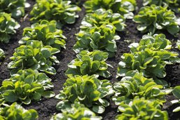 Fenaco s'oppose aux producteurs bio