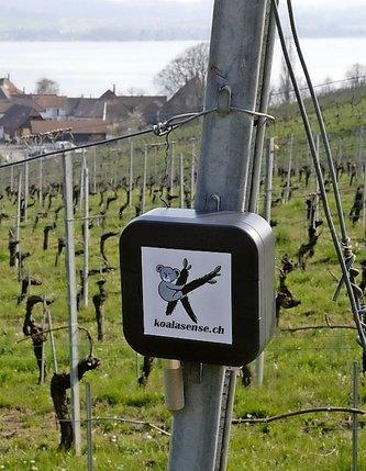 Des vignes à la Coupe du monde de ski