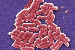 """Certaines bactéries """"renforcées"""" par des doses plus élevées d'antibiotiques"""