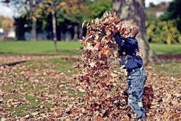 Il n'y aura bientôt plus d'automne
