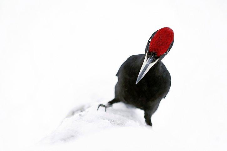 Nez à bec avec les oiseaux d'Europe