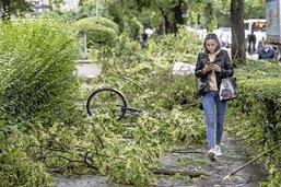 Les villes ont mal à leurs arbres